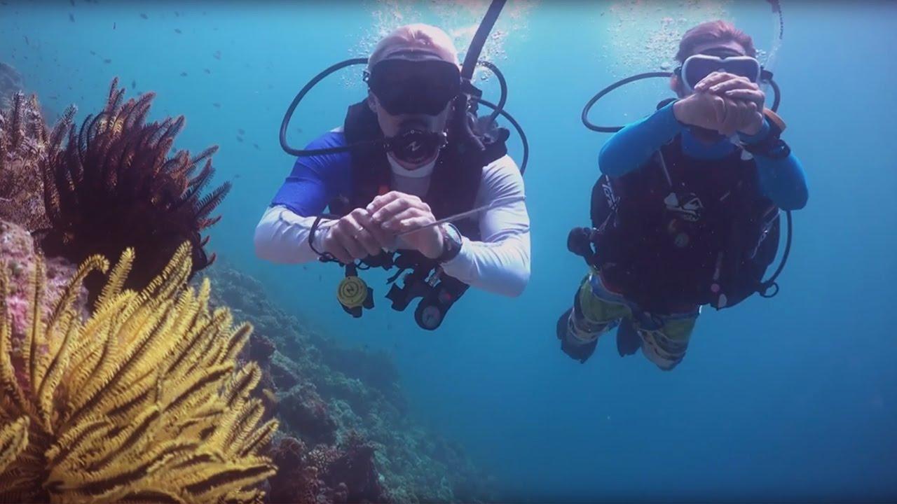 Дайвинг для новичков на ближних островах в Паттайе